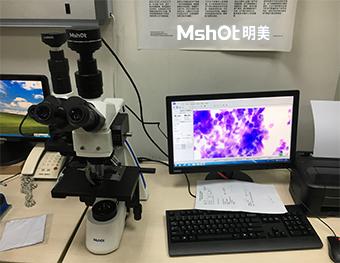 显微镜MF31